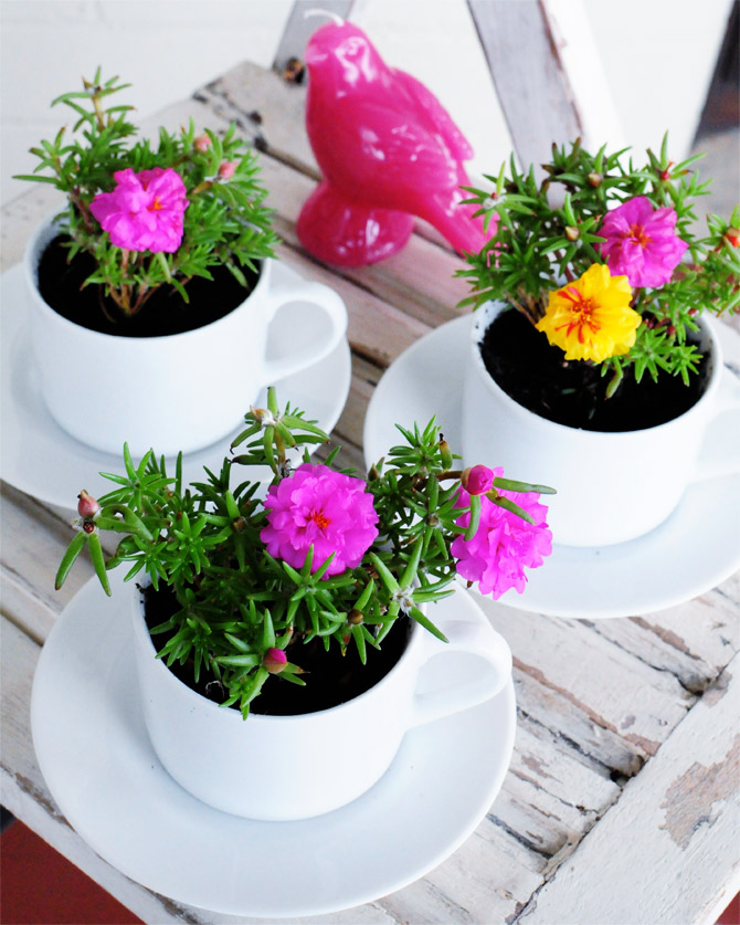 Go-make-me-tea-cup-plantings