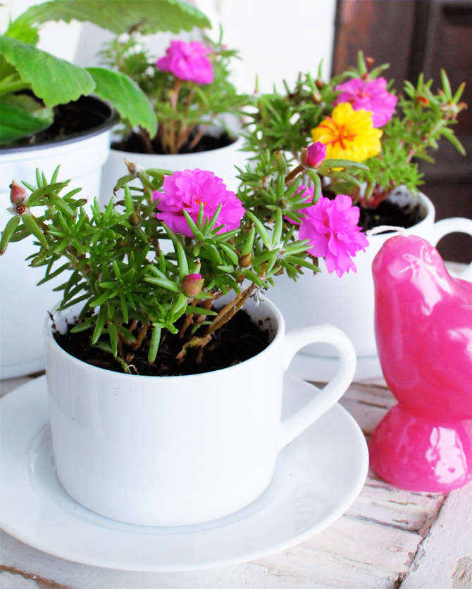 gardening diy planter teacup home decor creative