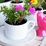 Cups-planters