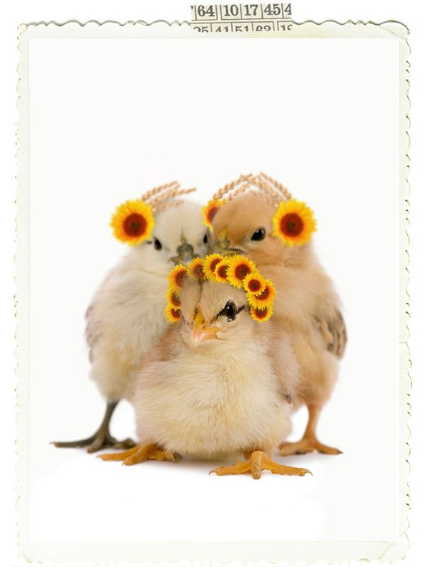 Little-chicks-with-easter-bonnets