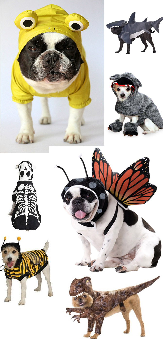 Pets-and-halloween