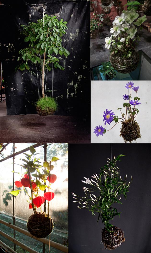 Kokedama or String Garden